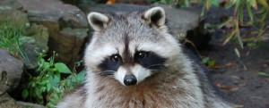 acecometh's Profile Picture