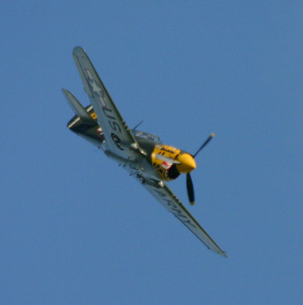 war hawk p40 by Sceptre63
