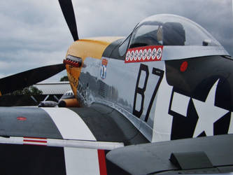 p51d frankie back view by Sceptre63