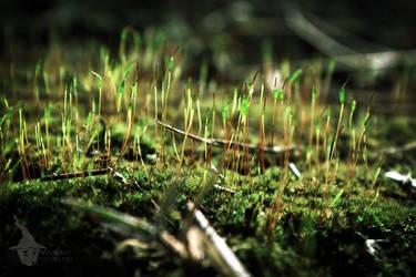 MACRO: Little green hope by direwolveScosPHOTO