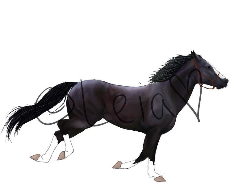 Black Galloping Paint Horse by wideturn on DeviantArt