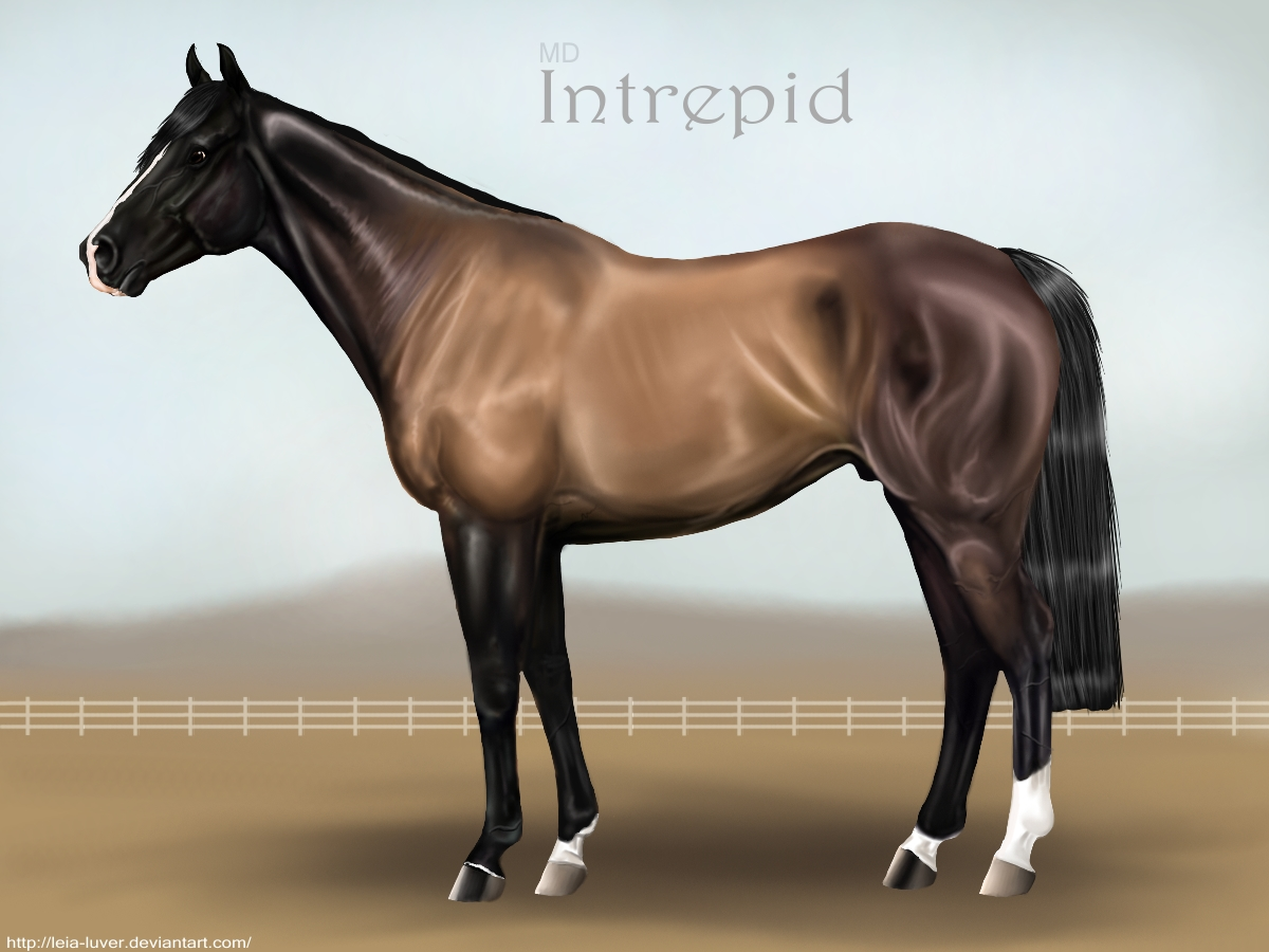 MD Intrepid by wideturn