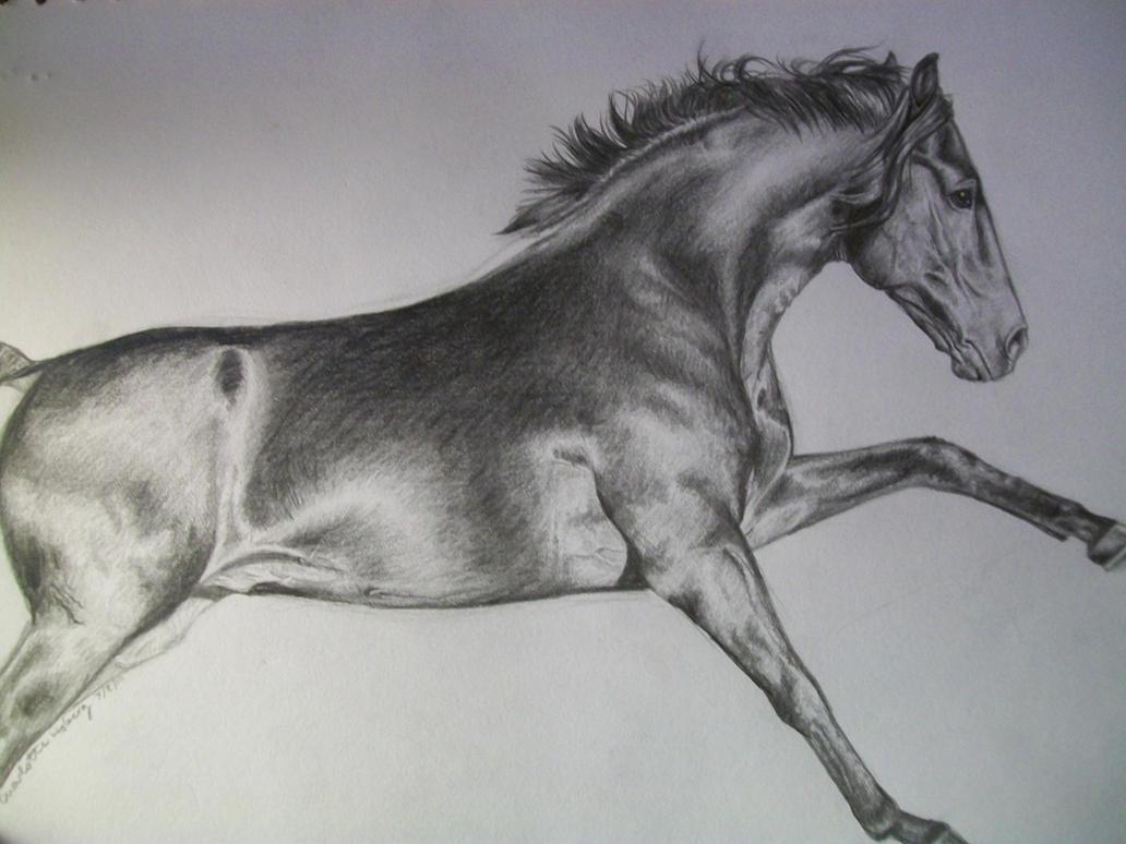 Running Horse by wideturn on DeviantArt
