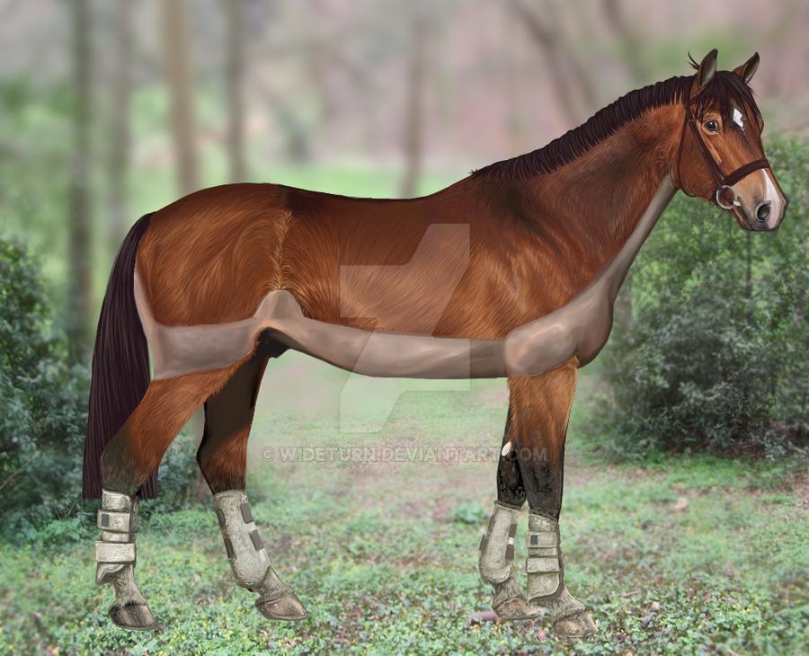 D'Yer Mak'er - Hanoverian Stallion by wideturn