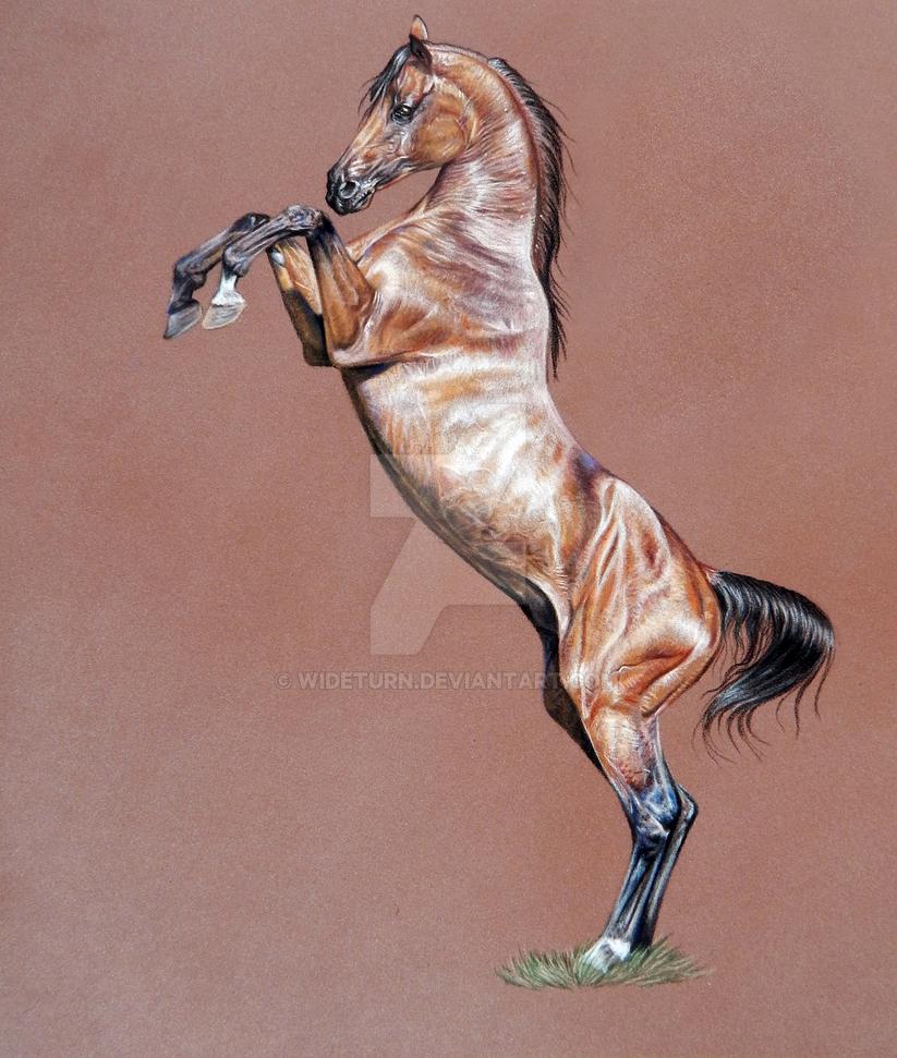 Rearing Arabian by wideturn