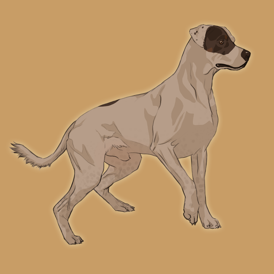 Pax Dog by wideturn