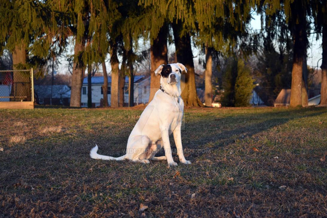 Regal Pup by wideturn
