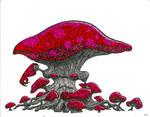 Fungus Ent