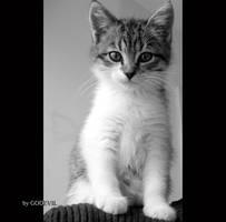 Little Izzy