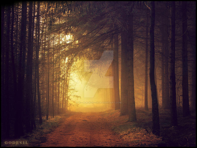 Forest Of Delusion by x---A-R-N-O---x