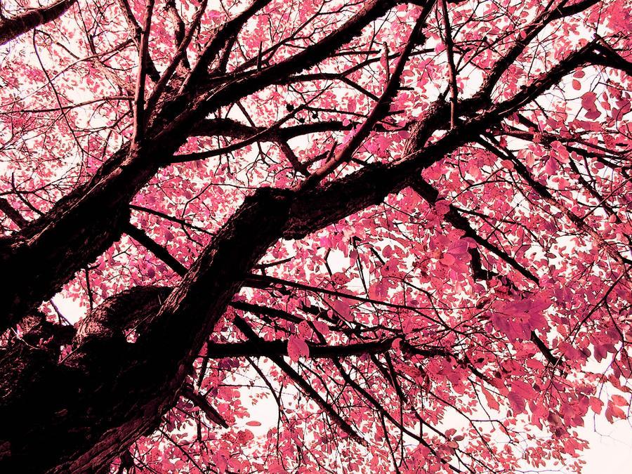 Pink leaves by Meireis