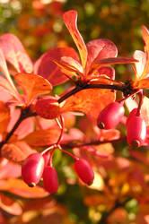 Astonishing autumn by Meireis