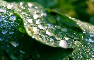 Drops by Meireis