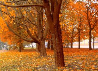 Orange city by Meireis