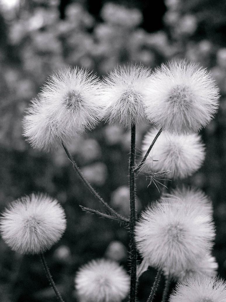 Fluffy by Meireis