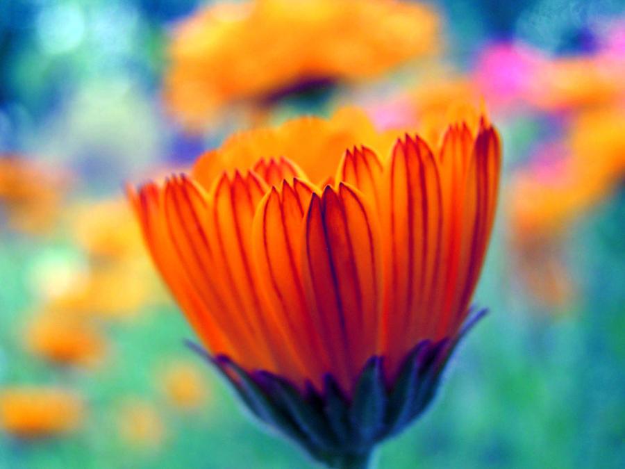 Colourful nature