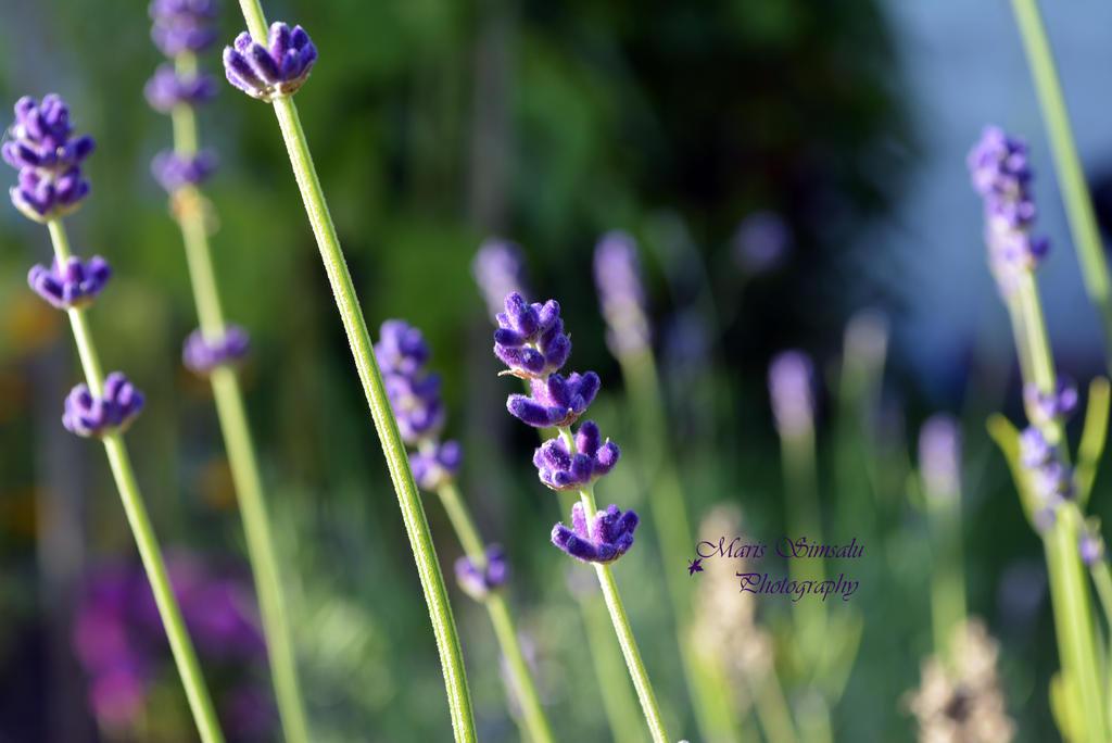 Pretty Purple by Meireis