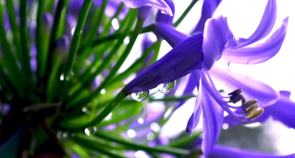Purple Paradise by Meireis