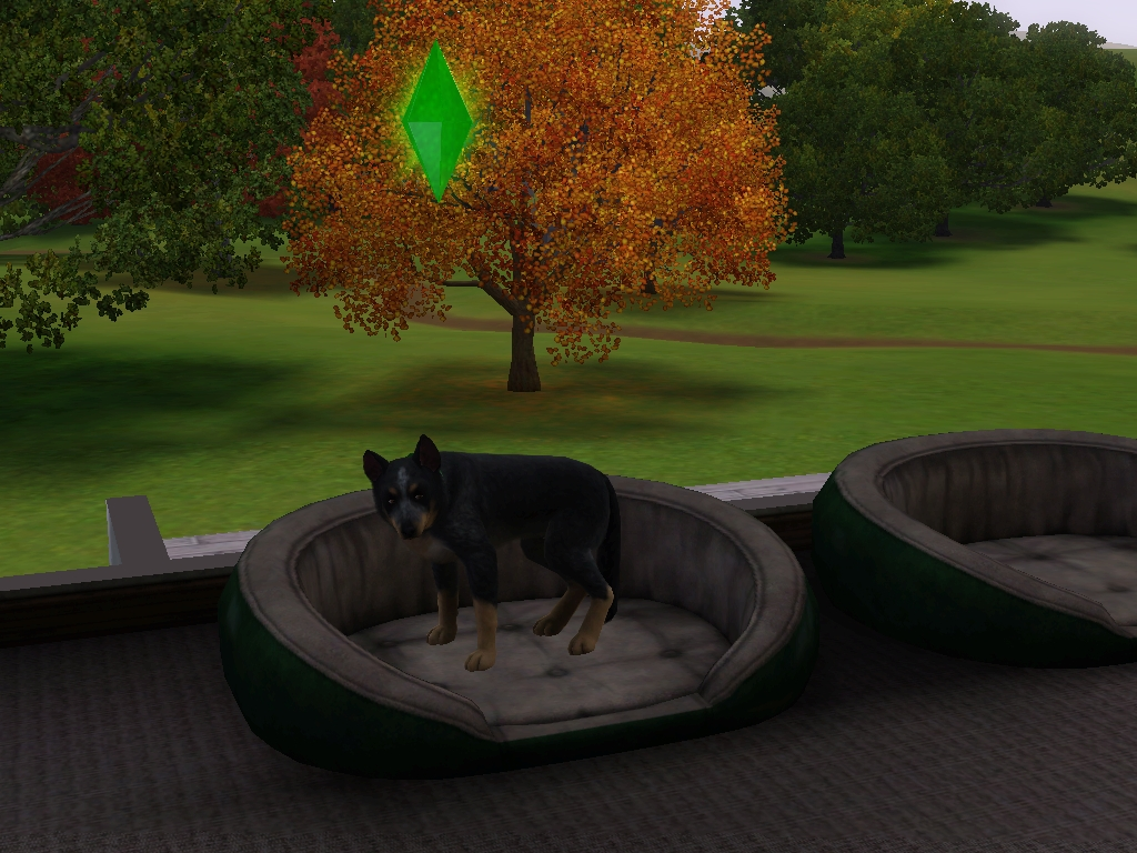 Sims  Cats And Dogs Breedinh