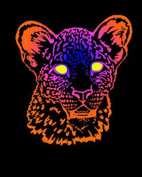 The Multicolored Cat