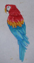macaw by Sifle