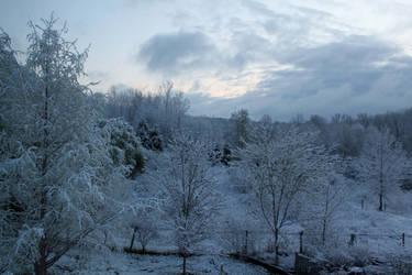 Snowy landscape backyard