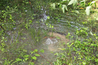 Water table bubbling up
