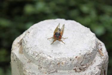 Cicada ready for their close up!