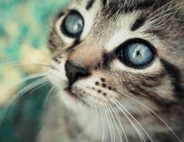 Kitty by kachahaha