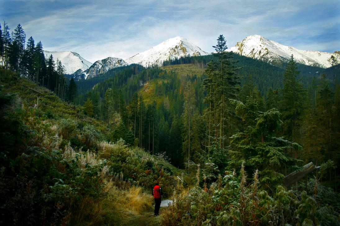 Into the Wild by kachahaha