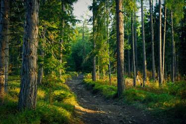 Tatrzanski las
