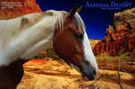 paint 11- Arizona