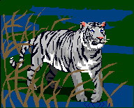 sweet tiger. by daddysgirl554