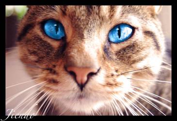 Behind Blue Eyes by Jiendo