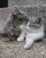 Friends by TigressRampant