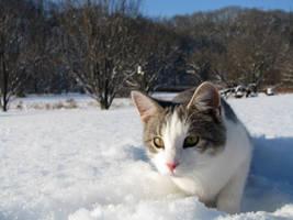 Snow Pounce by TigressRampant