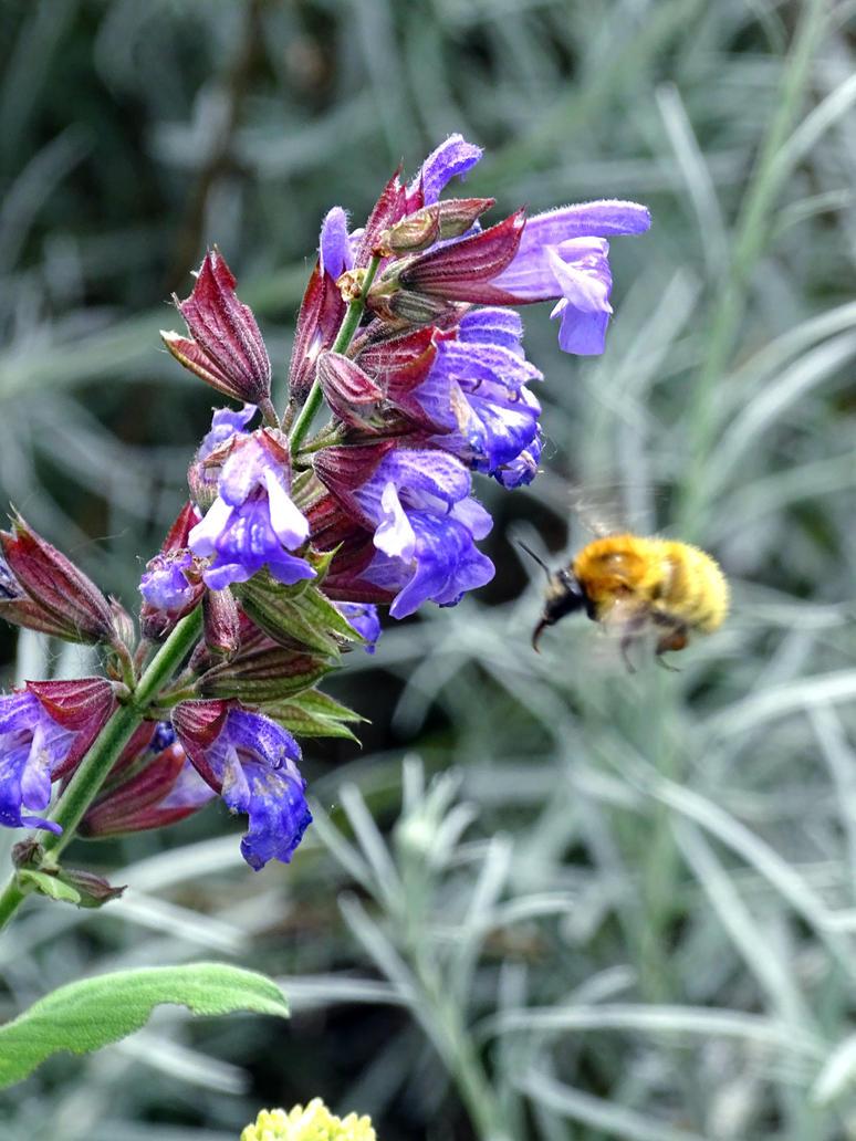 Hyper speedy bee landing by ktulukru