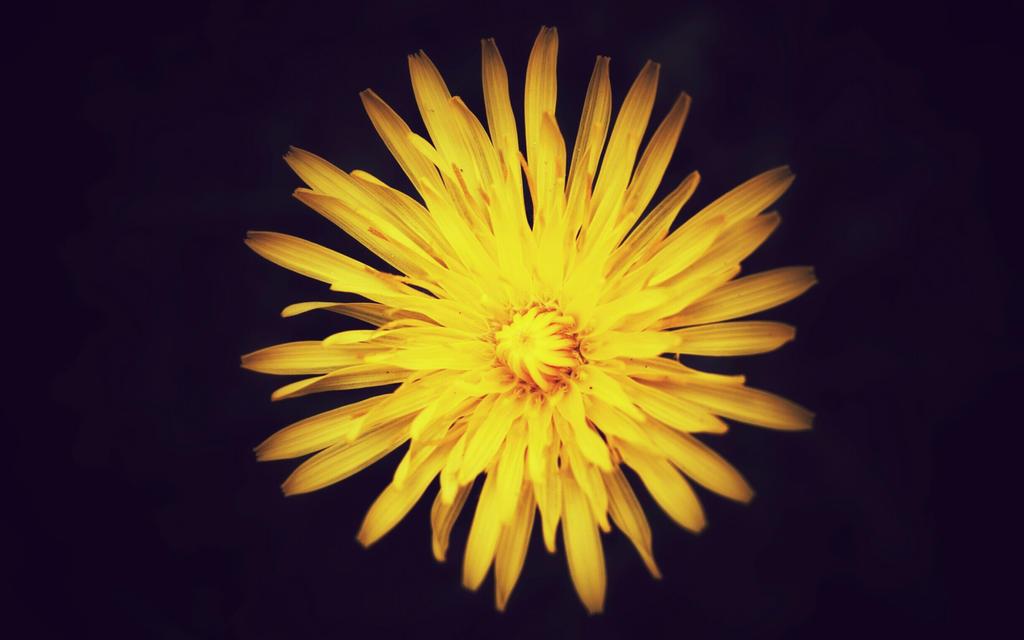 [19] Yellow flower by Woziu542