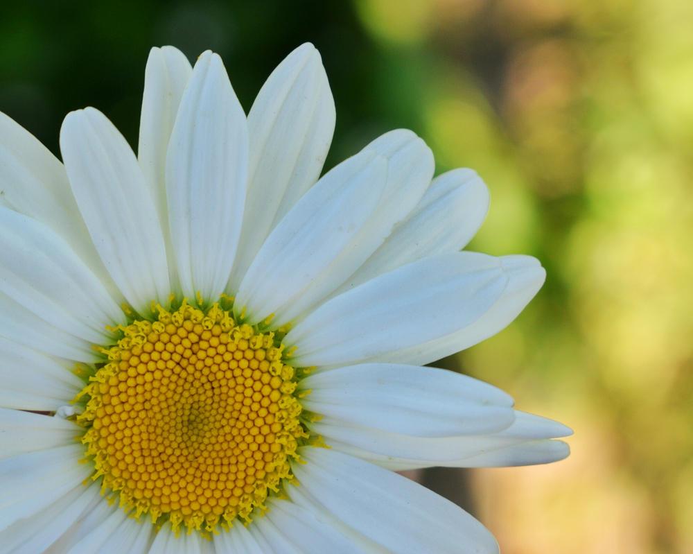[22]  Spring Flower I by Woziu542