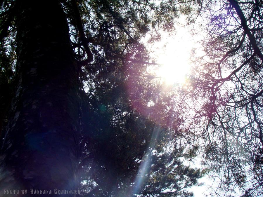 Summer sun by Japaneska