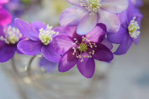 Anemones by reaktionista