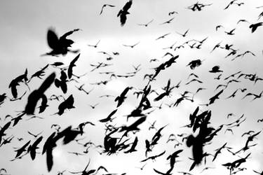 Bird storm by reaktionista