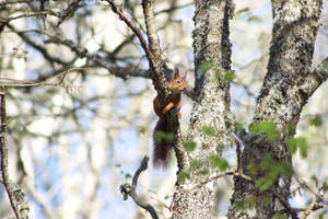 Little squirrel by reaktionista