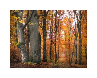 The Magic Forest II by Callu