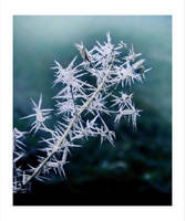 Frost Short Visit by Callu