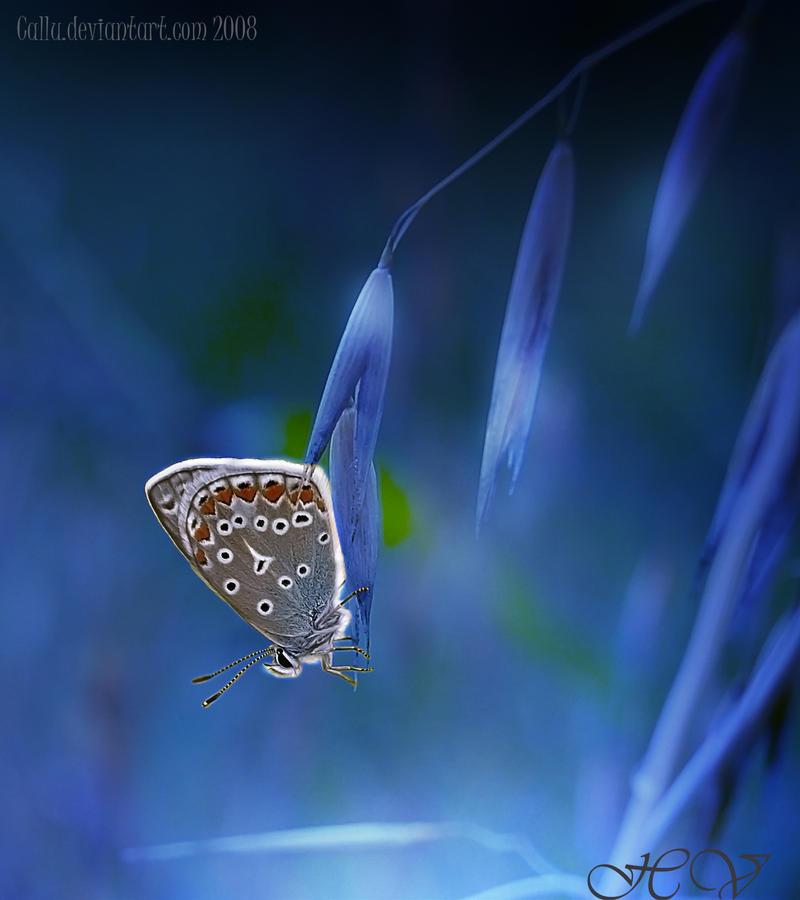 Pacific Blue by Callu
