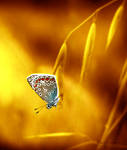 Honey Light II by Callu