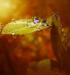Taste of Honey II by Callu
