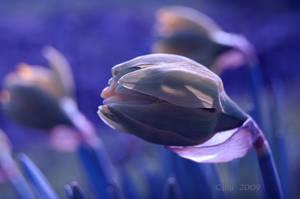 Blue IV by Callu