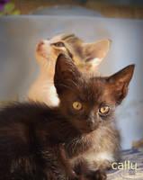 Kittens by Callu